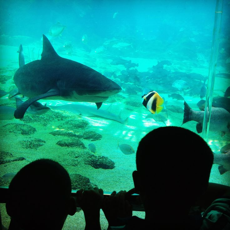 In awe.  Sea World, Gold Coast, Australia