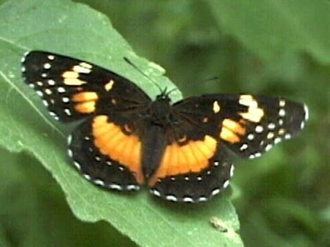 What Do Butterflies Eat: Facts About Butterflies - YouTube