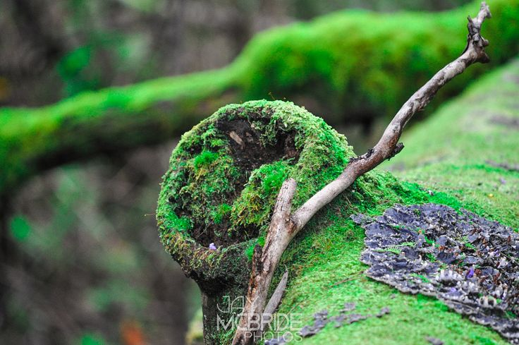Rainforest by http://jaymcbride.photos