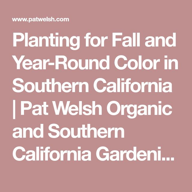 Planting for Fall and Year-Round Color in Southern California | Pat Welsh Organic and Southern California Gardening