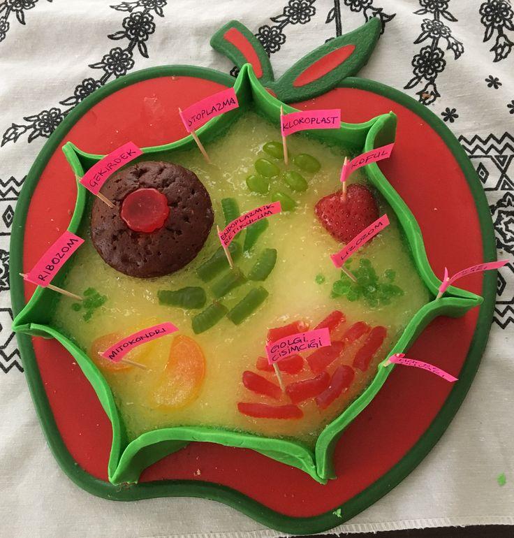 Bitki Hücresi maketi tamamen yenebilir , kek, muhallebi, limonlu jöle, şekerlemeler 😊 Plant Cell yummy one ;)