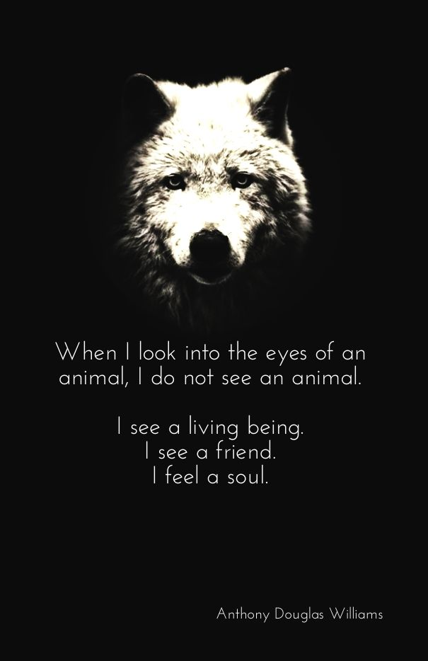 When i look into the eyes of an animal, i do not see an animal. i see a living being. i see a friend. i feel a soul. anthony douglas williams