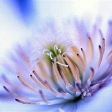 white beauty by Nobuta49 in  Photography