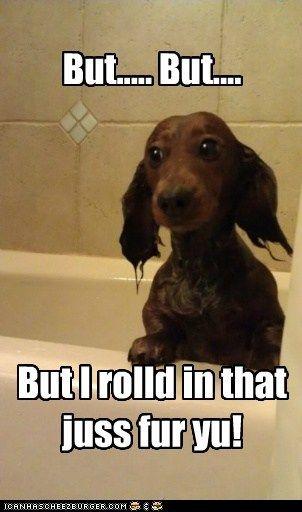 Oooooh, das erinnert mich daran,wie mein Hund sich in totem Fisch gewälzt hat. Igitt!