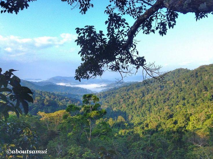 Bye-bye, Laos, see you soon  Этот вид из нашей спальни в домике на дереве надолго останется в наших воспоминаниях о Лаосе. Мы прощаемся с этой удивительной, малоизвестной, красивой и противоречивой страной.  За время путешествия мы насладились великолепной природой, горами и водопадами, попробовали вкусную местную еду и хрустящие французские багеты, испытали массу ярких впечатлений, когда летали на воздушном шаре и катались на зиплайнах