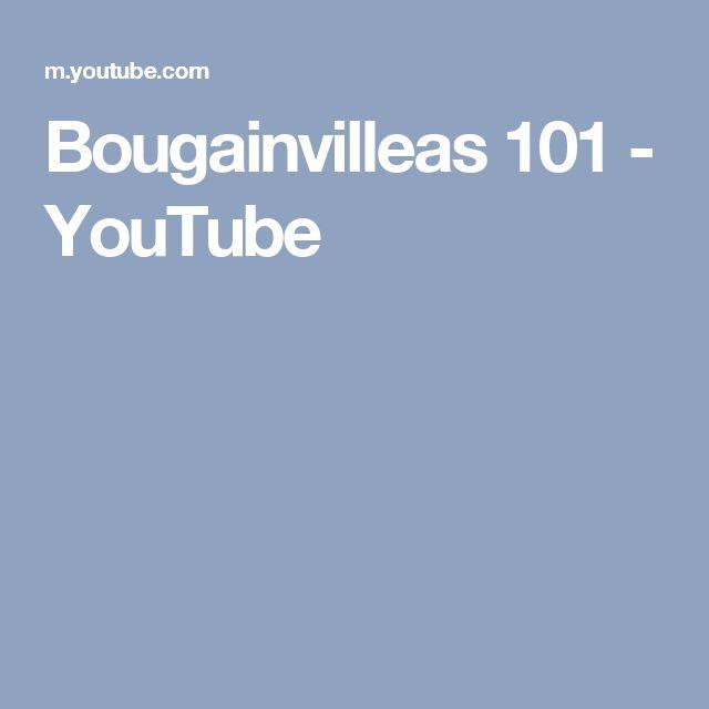 Bougainvilleas 101 - YouTube