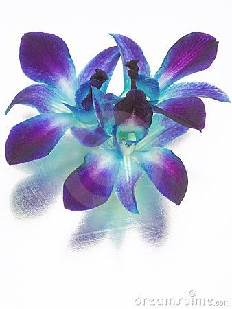 Blue And Purple Orchids Royalty Free Stock Images - Image: 8207029