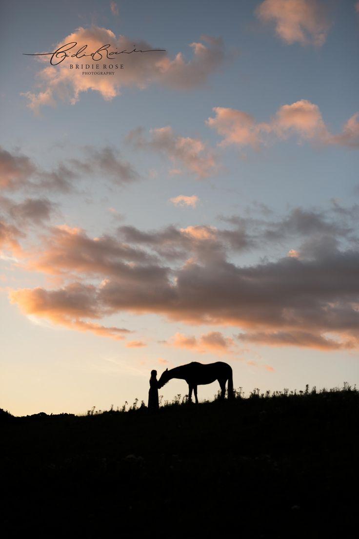 Horse Photography   Equine Portraits   #horsephotography #equine