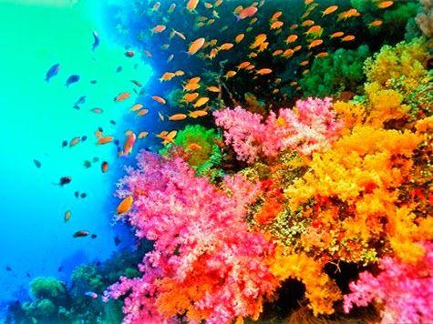 AQUECIMENTO GLOBAL HOJE: Corais do Pacífico perdem a cor devido ao aquecime...