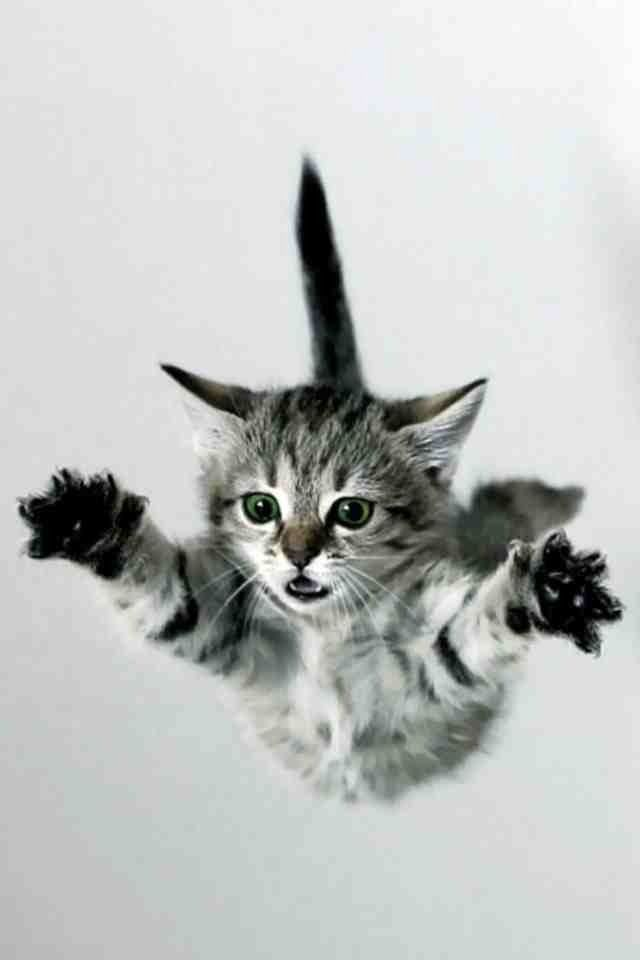 Ringling Brothers flying cat!