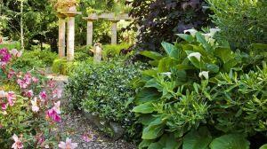 Preview wallpaper greens, garden, flowers, plants, summer 1920x1080
