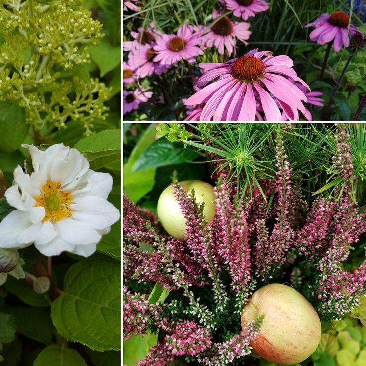 Några av höstens färger! 🍂🍂🍂🍂🍂#lillahults #perenner #trädgård #svenskaäpplen