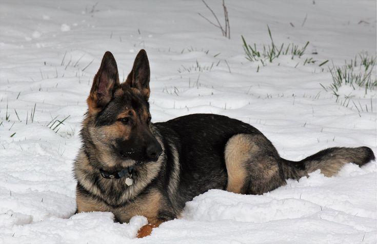 Meet my first pup Vern http://ift.tt/2FhYQxr