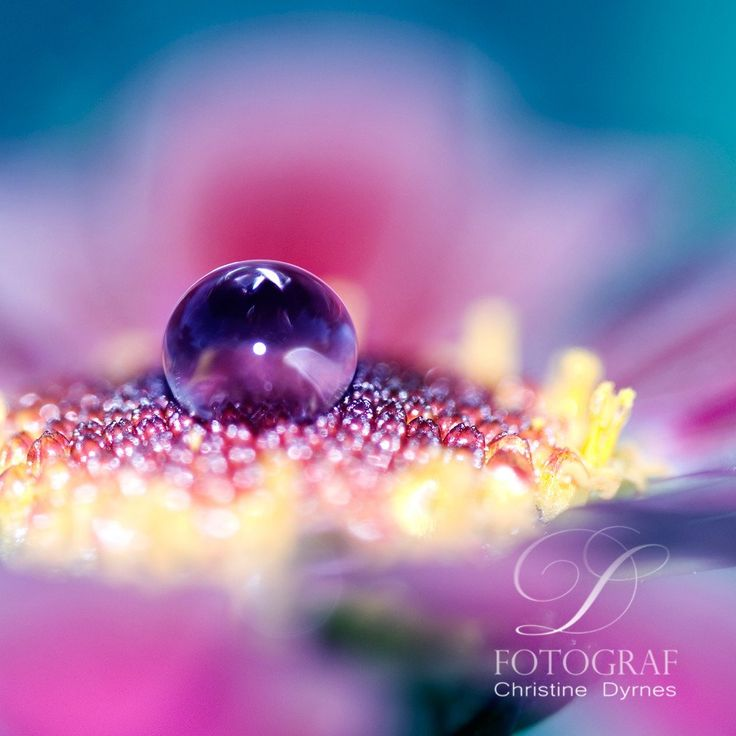 Artistic water drop - I am purple - Limited edition of  10 copies
