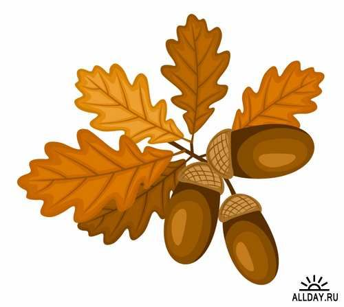 The  Best Acorn Nut Image Ideas On   Image For Acorns