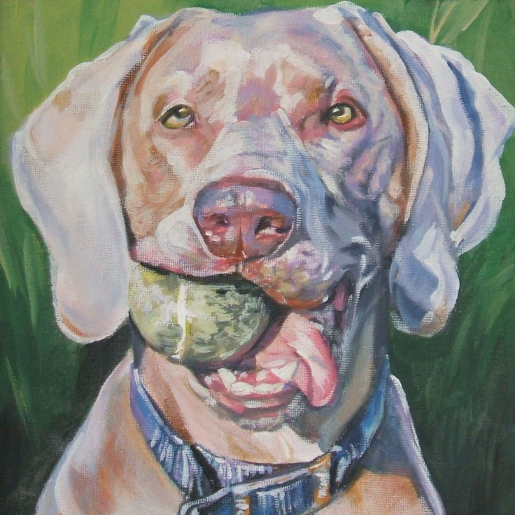 Weimaraner art print CANVAS print of LA Shepard painting 12x12 dog art by TheDogLover on Etsy https://www.etsy.com/listing/80902399/weimaraner-art-print-canvas-print-of-la