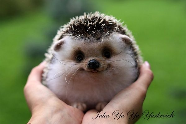 Aww, he's a happy hedgehog!