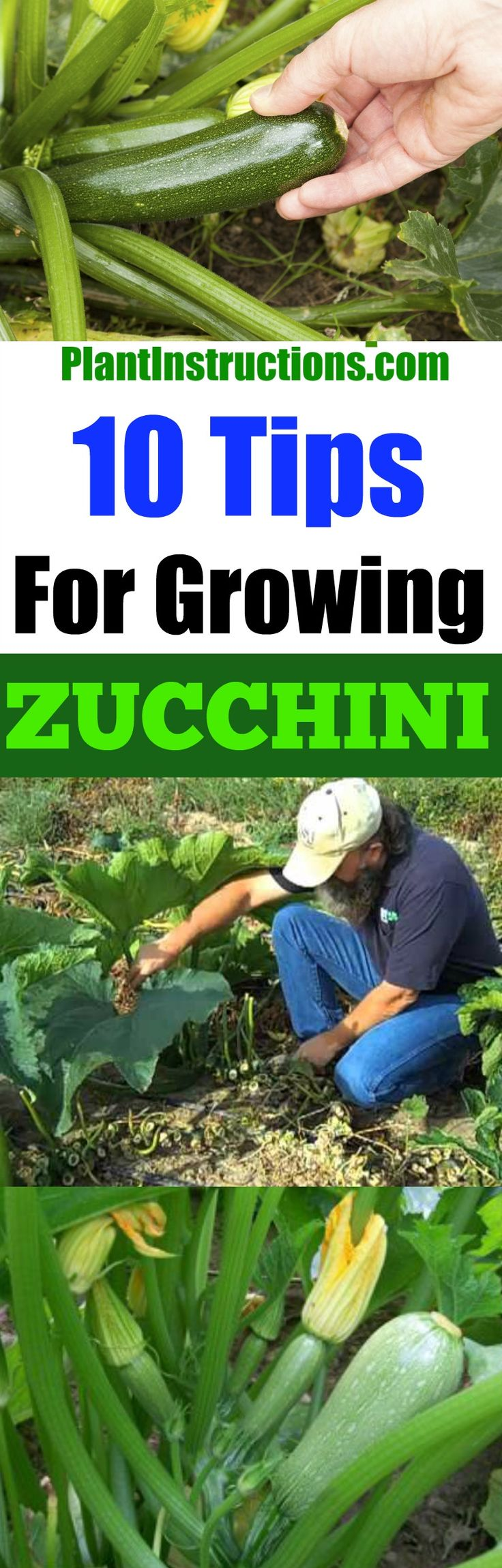 tips for growing zucchini