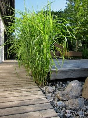Anna Vattenkannas Trädgård: Illusioner 4 - små nivåskillnader