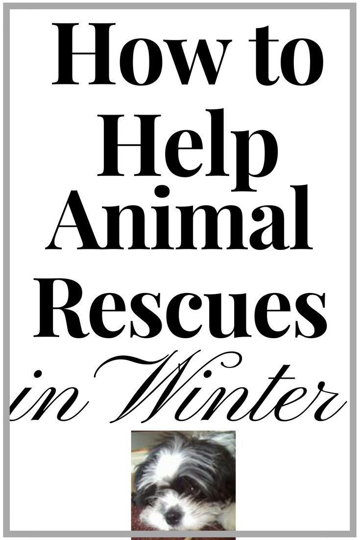 Best 25 Cat rescue centres ideas on Pinterest