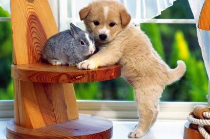 Дружить — не значит знать кого-то очень долго. Это значит принять в свою жизнь того, кто никогда из неё не исчезнет.