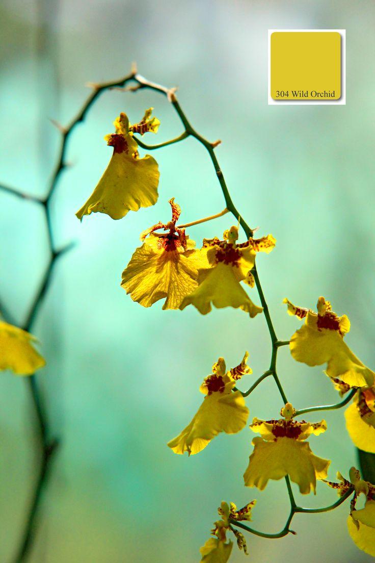 Farbton No.304 der apprico Colours: Wild Orchid (Element Holz)  #appricoColours #fengshui