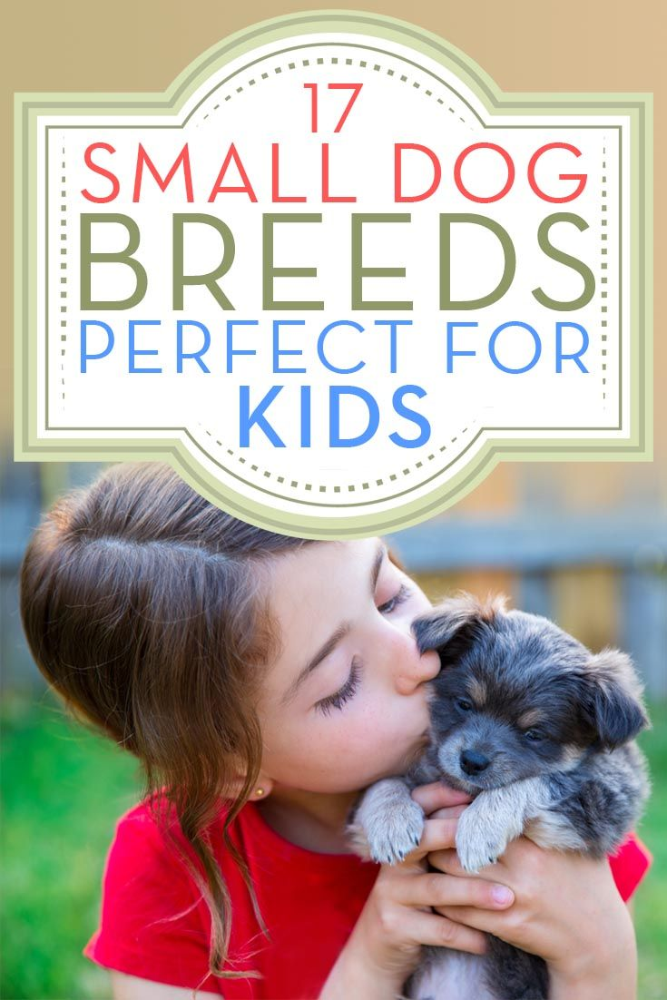 17 Small Dog Breeds That Are Good With Kids Best Dogs For Kids Dogs And Kids Cute Cats And Dogs