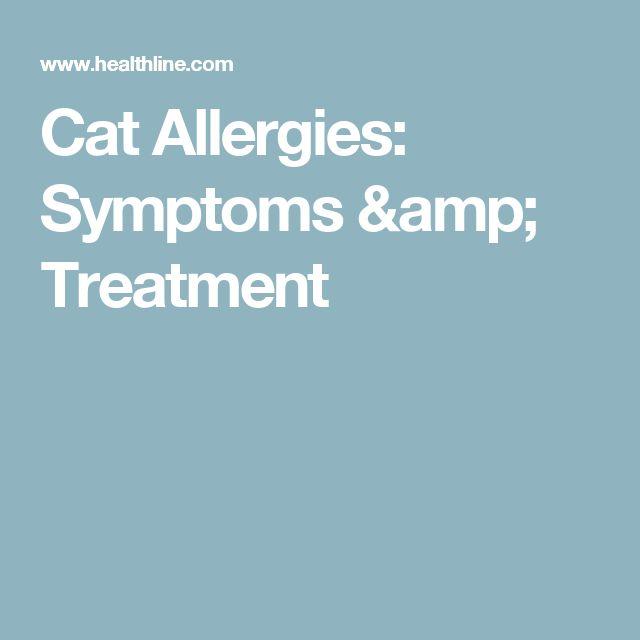 Cat Allergies: Symptoms & Treatment