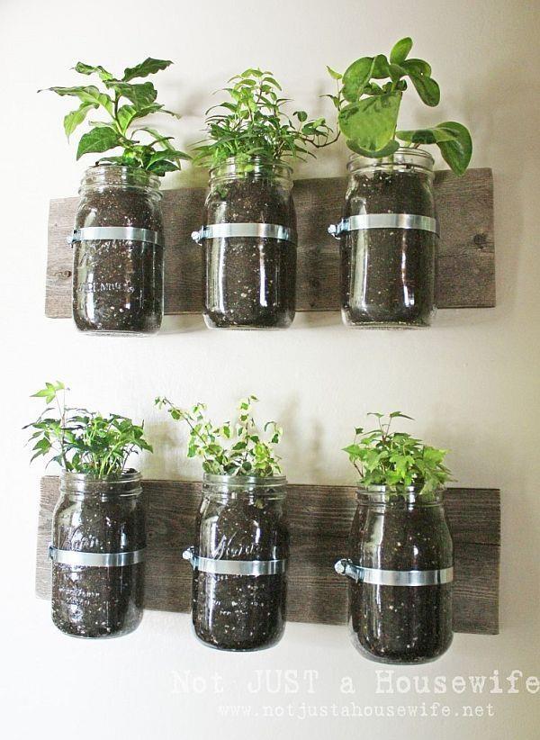 mason jars repurposed to grow herbs