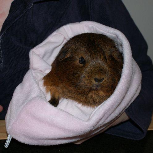 guinea pig sleeping bag | Guinea Pigs | Pinterest