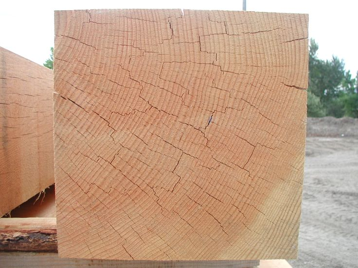 Large Cut Timber from Dead Standing Douglas Fir