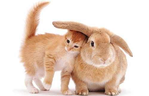 A cat and a rabbit.