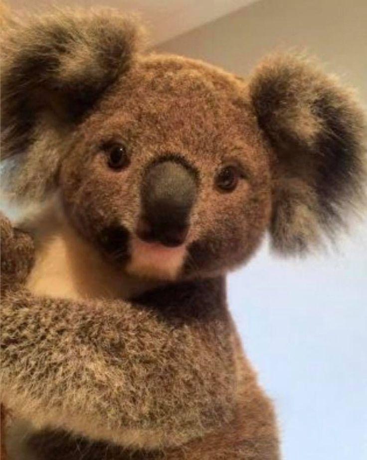 Cute Koala Bear, Cute Animals, Baby