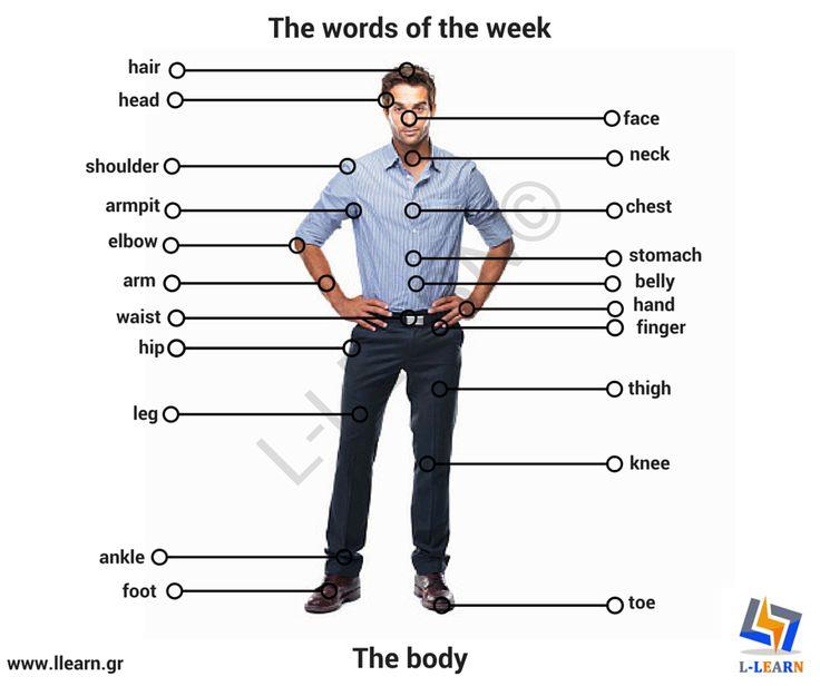 The body. #Αγγλικά #αγγλικές #λέξεις #αγγλική #γλώσσα #λεξιλόγιο #English #english #words #english #language #vocabulary #LLEARN
