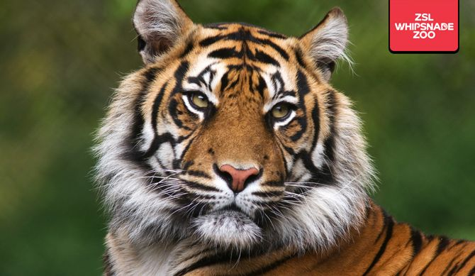 Discount UK Holidays ZSL Whipsnade Zoo Entry + Local Hotel Stay & Breakfast Discounted by 27%  BUY NOW for just £79