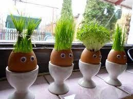 A arte de reaproveitar cascas de ovos para cultivar plantinhas e temperos vem sendo utilizado a muito tempo, principalmente para ince...