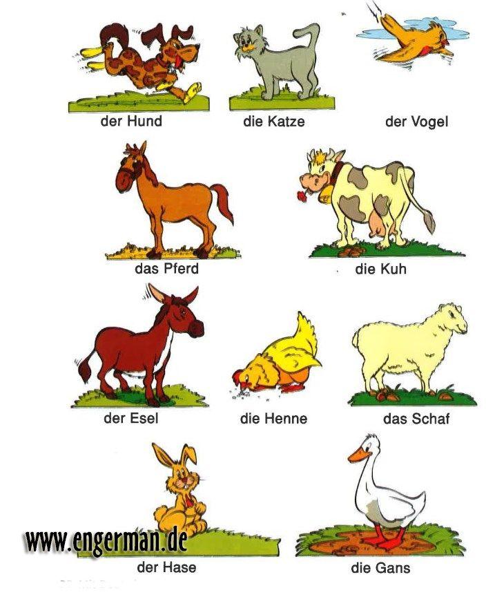 постер про животных на немецком зеленковская говорит, что