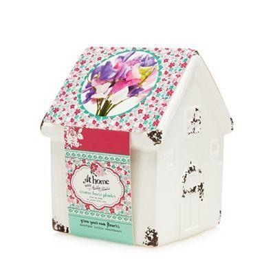 Debenhams At Home with Ashley Thomas ceramic house planter | Debenhams