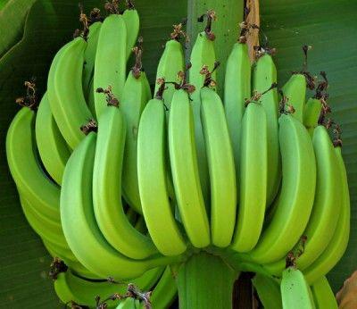 How to grow bananas no matter where you live. www.offthegridnew... Image source: RGBstock.com