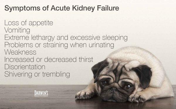 Symptoms Of Acute Kidney Failure In Dogs Chronic Kidney Failure Kidney Kidney Failure Symptoms