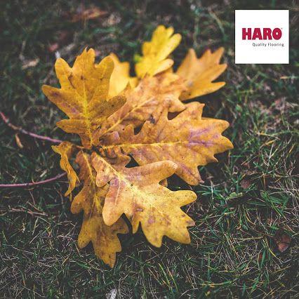 A tölgy fa elhullott levelei az ősz csodás látványához tartozik. Némely fa levél, annyira csodás színekben pompázik, hogy nem tudjuk megállni, hogy ne vegyük fel,és csodáljuk meg közelebbről, vagy akár ne vegyük haza gyermekeinknek, vagy családtagjainknak. :) Ti mit szerettek a legjobban az őszben?   www.dreamfloor.hu