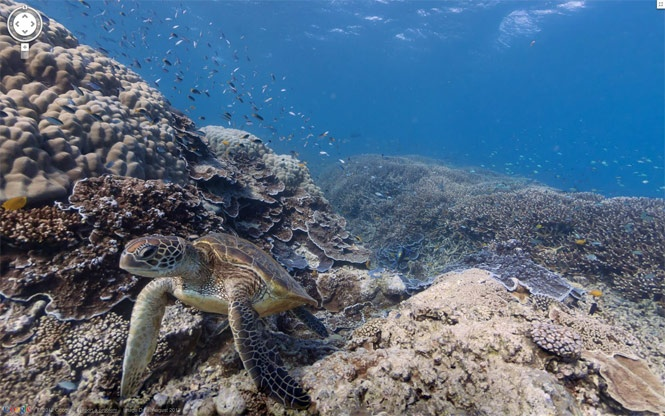 """Google unveils first-ever underwater """"street-view"""" (and it's amazing)"""