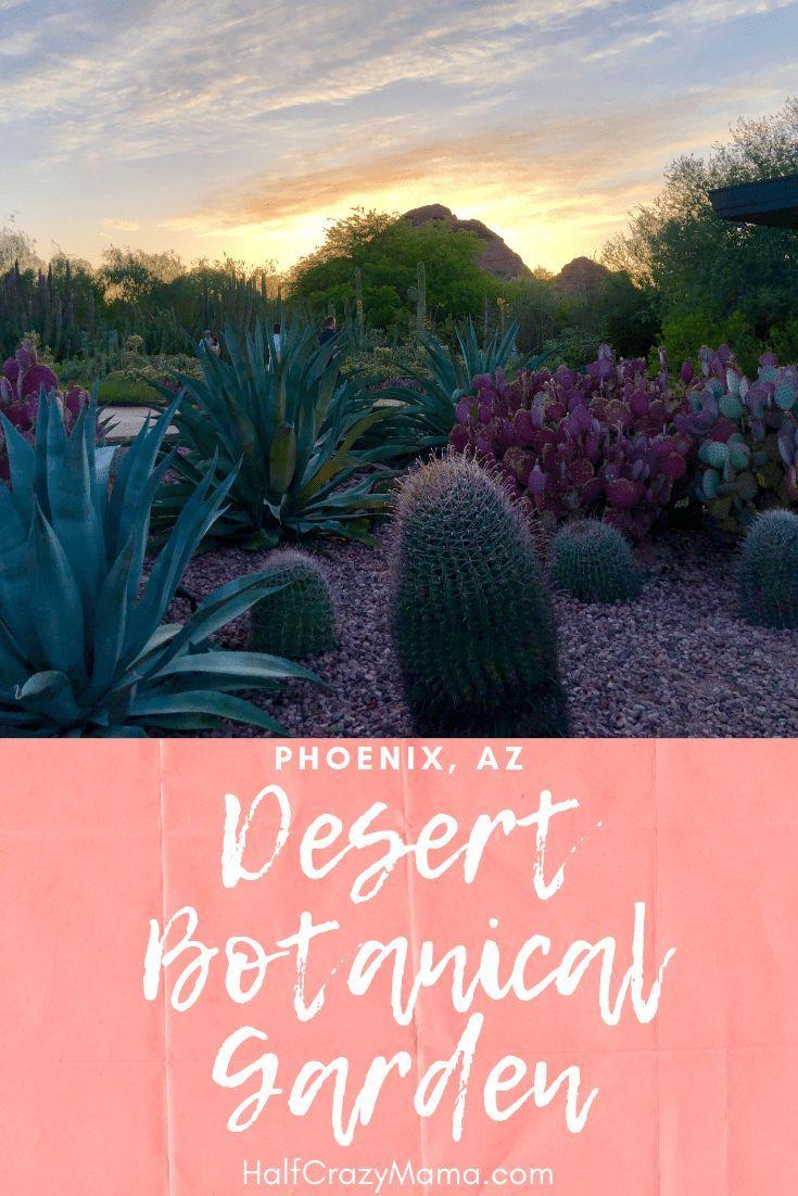 Desert Botanical Garden Desert Botanical Garden Phoenix Desert Botanical Garden Garden