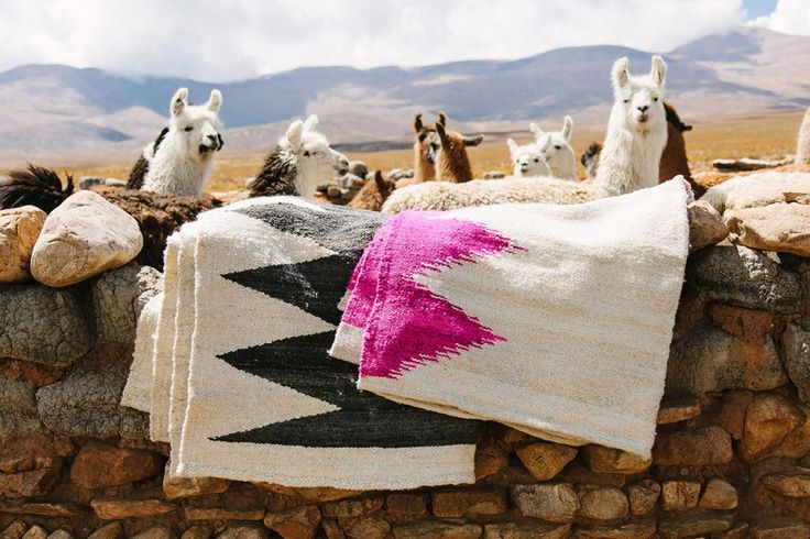 Beauties....standing proudly with their gorgeous woollen blankets!! K