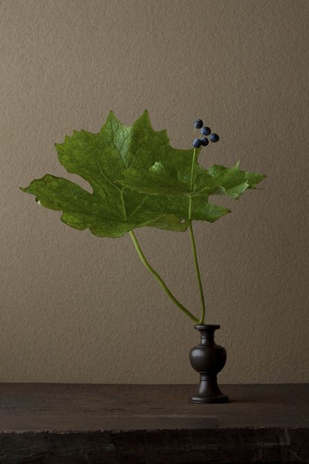 一日一花 One Flower a Day - 川瀬敏郎 Toshiro Kawase