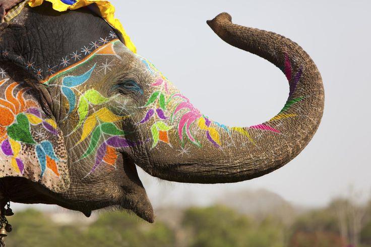 La capitale du Rajasthan, la « ville rose », tient son nom de la couleur de ses palais, ses Havelis et ses forts construits en grés rose. Encerclée par des collines, Jaipur est protégée par sept portes   Mon Voyage Inde