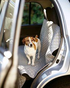 Moving Checklist Tips Carpet Spot Cleaner Martha Stewart Pets