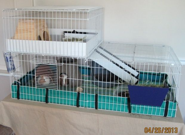 Our hybrid midwest cage nearly done for Guinea pig stand