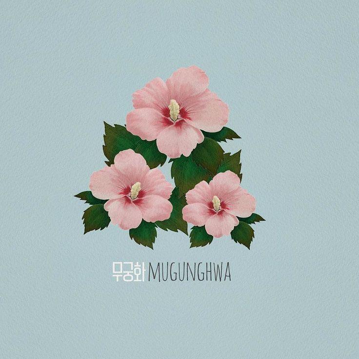 Korean National Flower Flower Drawing Botanical Art Rose Of