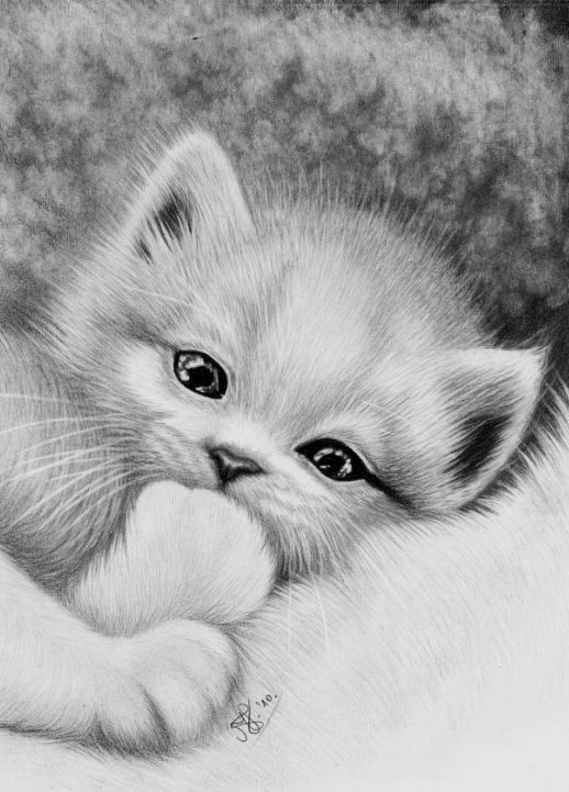 543 best images about dibujo on Pinterest | Realistic ...